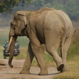 My Tusker Sighting in the Monsoons - WCT