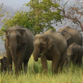 Donate to Wildlife Conservation Trust