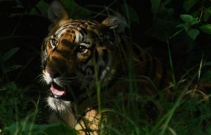 Save Our Tigers - Supported NGOs - WPSI - WCT