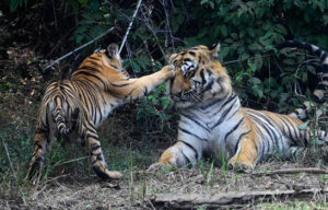 Save Our Tigers - Supported NGOs - Wildlife First - WCT