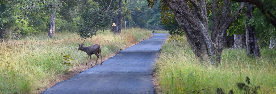 Road Ecology - Wildlife Conservation Trust