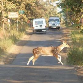 Roadkills-Wildlife Conservation Trust