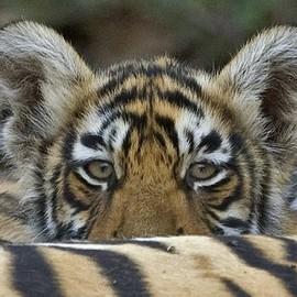 Wildlife Conservation Trust - Financials