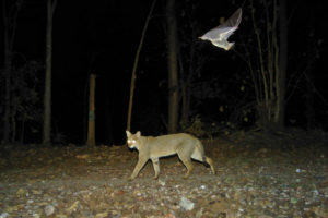Camera Trapping Outside Protected Areas -Wildlife Conservation Trust-Media