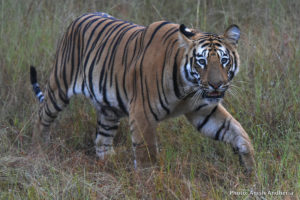Press-release-Promote-inter-state-collaboration-on-tiger-conservation-WCT-Media