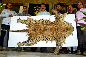 Tightening-The-Noose-On-Wildlife-Crime-Wildlife-Conservation-Trust