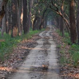Careers - Wildlife Conservation Trust