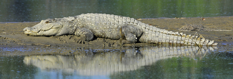 Impact - Wildlife Conservation Trust