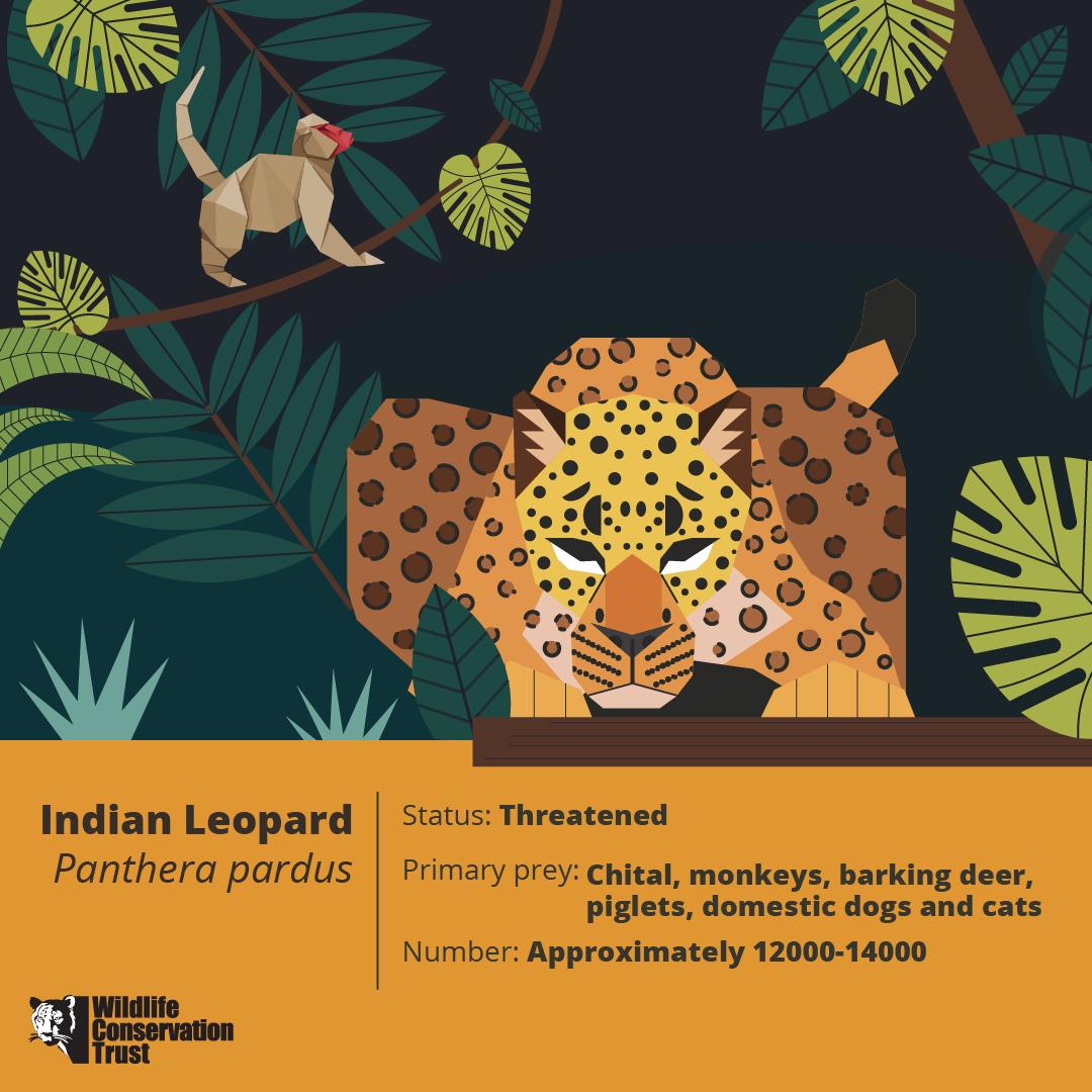 Wildlife Week - Leopard - WCT
