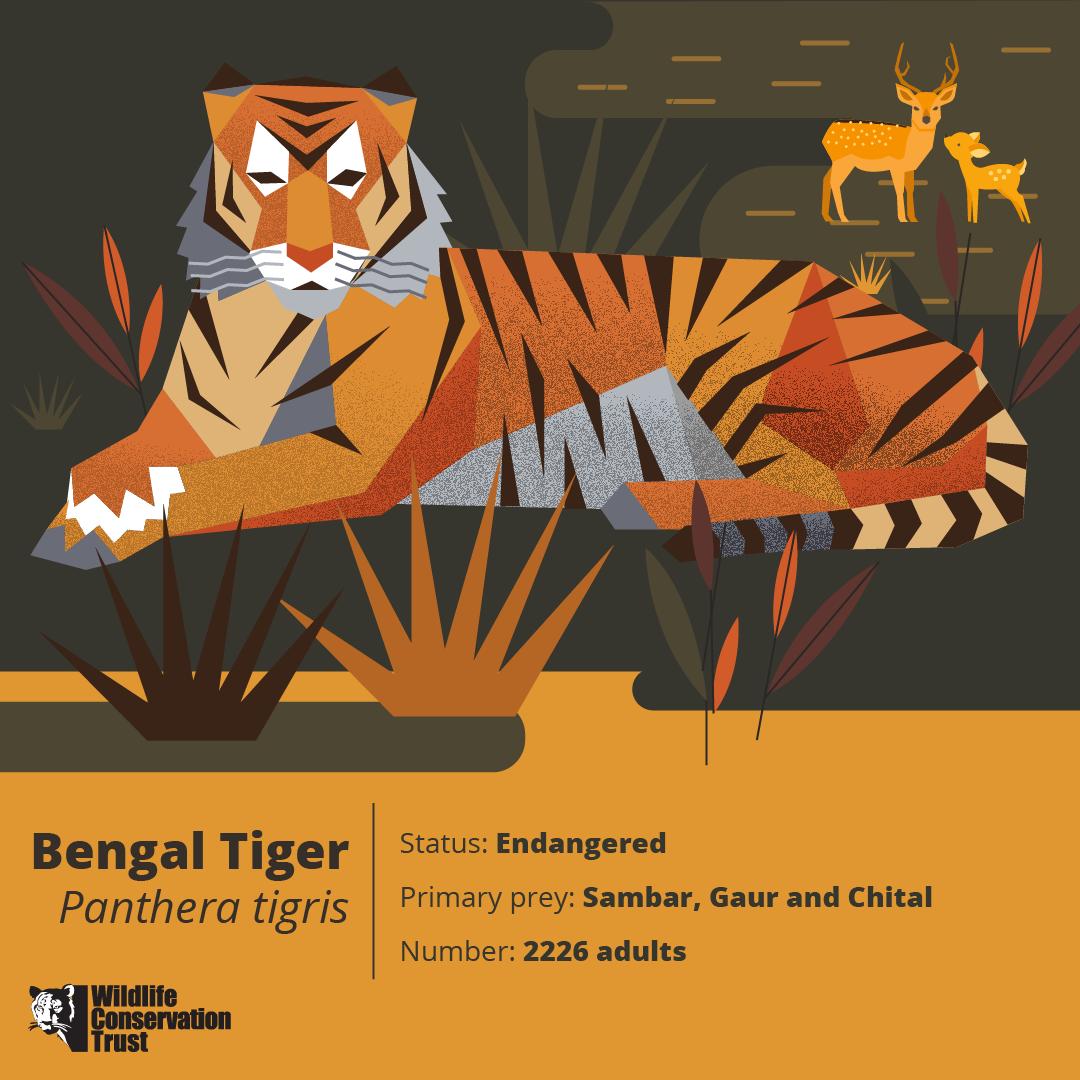 Wildlife Week - Tiger - WCT