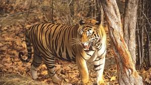 Media - Wildlife Conservation Trust