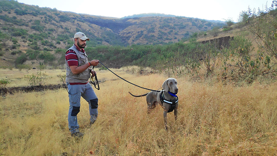 Canine-Assisted Wildlife Investigation Programme - WCT