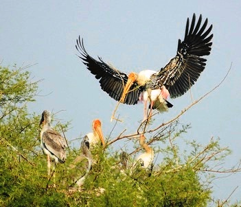 Catalysing Conservation - Painted Stork - WCT
