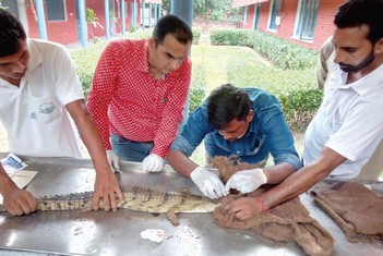 Catalysing Conservation - Facilitating Reintroduction of Gharial in Harike-Beas River System - WCT