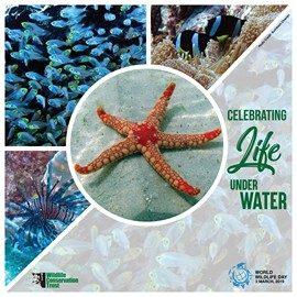 World Wildlife Day 2019 – Life below water - WCT