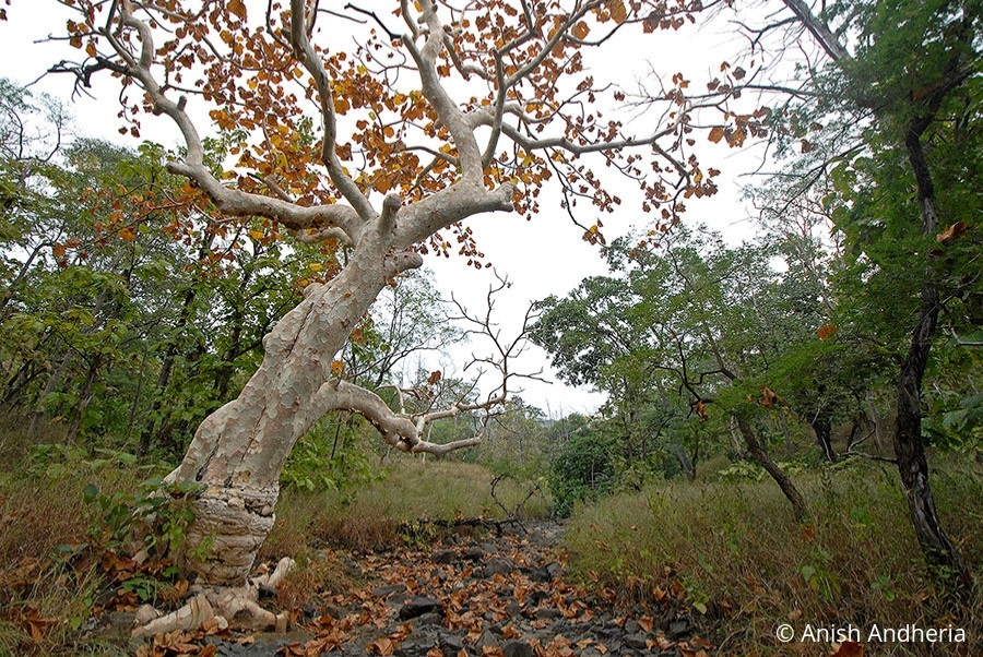 In Praise of the Ghost Tree - WCT