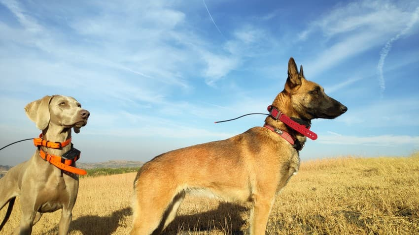 Canine-aided conservation work is an emerging domain, and holds immense promise. These trained dogs can help monitor large landscapes, assess corridor connectivity, study animal movement and genetic diversity, and a lot more.