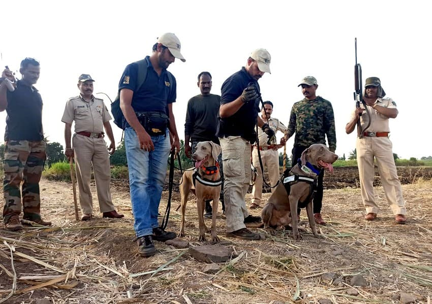 Conservation dogs ready to track a leopard that had entered a human-dominated landscape.