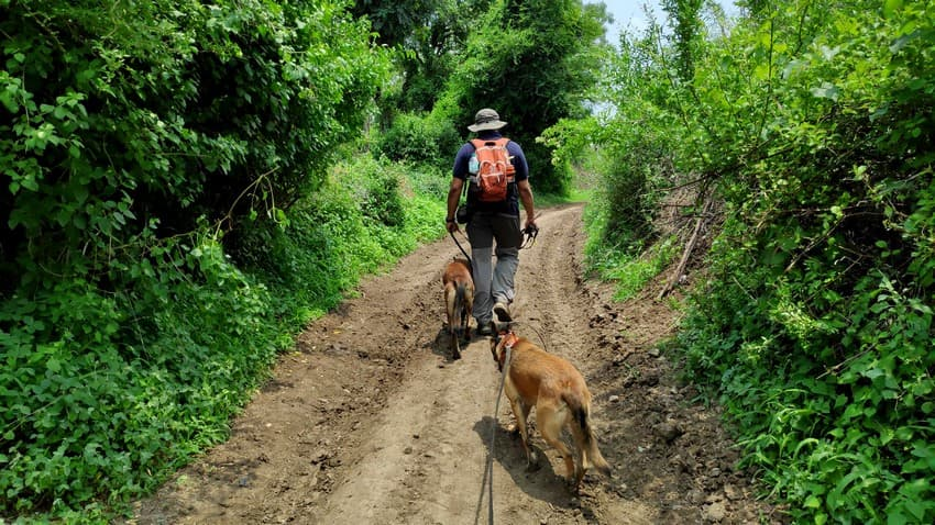 The WCT team takes dogs on snare detection patrol in a multi-use area in the buffer zone of the Melghat Tiger Reserve.