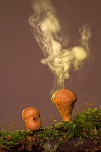 Fungal spores released in the air in their millions seed water droplets producing rainfall in tropical forests.