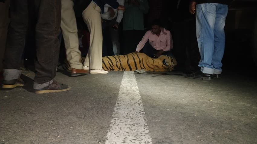The Curious Case of India's Wildlife Corridors: Eight-year-old Bajirao, a male tiger in Maharashtra's Bor Tiger Reserve, was killed along the National Highway-6 after being hit by a speeding vehicle in 2017.