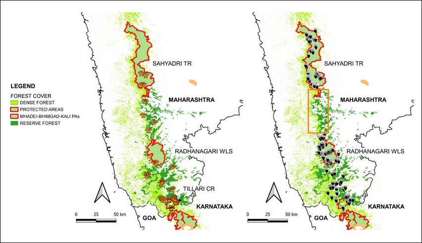 Upon looking closely at these two comparative maps of detections of tiger (left) and sloth bear (right) signs along the Sahyadri-Konkan Corridor, you will notice that there are no bear signs between Sahyadri TR and Radhanagari Wildlife Sanctuary. This shows that the sloth bear population in Sahyadri is isolated from the population down south, indicating the species sensitivity to habitat fragmentation.